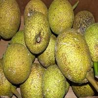 Breadfruit Fruit