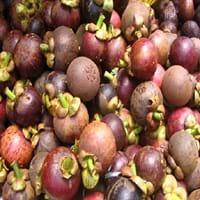 Purple Mangosteen Fruit
