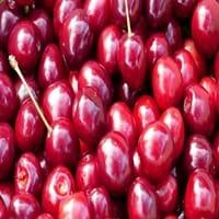 Sour Cherry Fruit