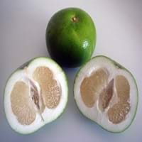 Ugli fruit citrus