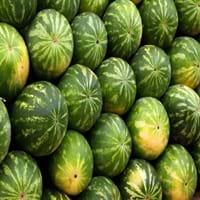 Watermelon Fruit
